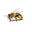 bug-img4