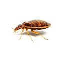 bug-img6